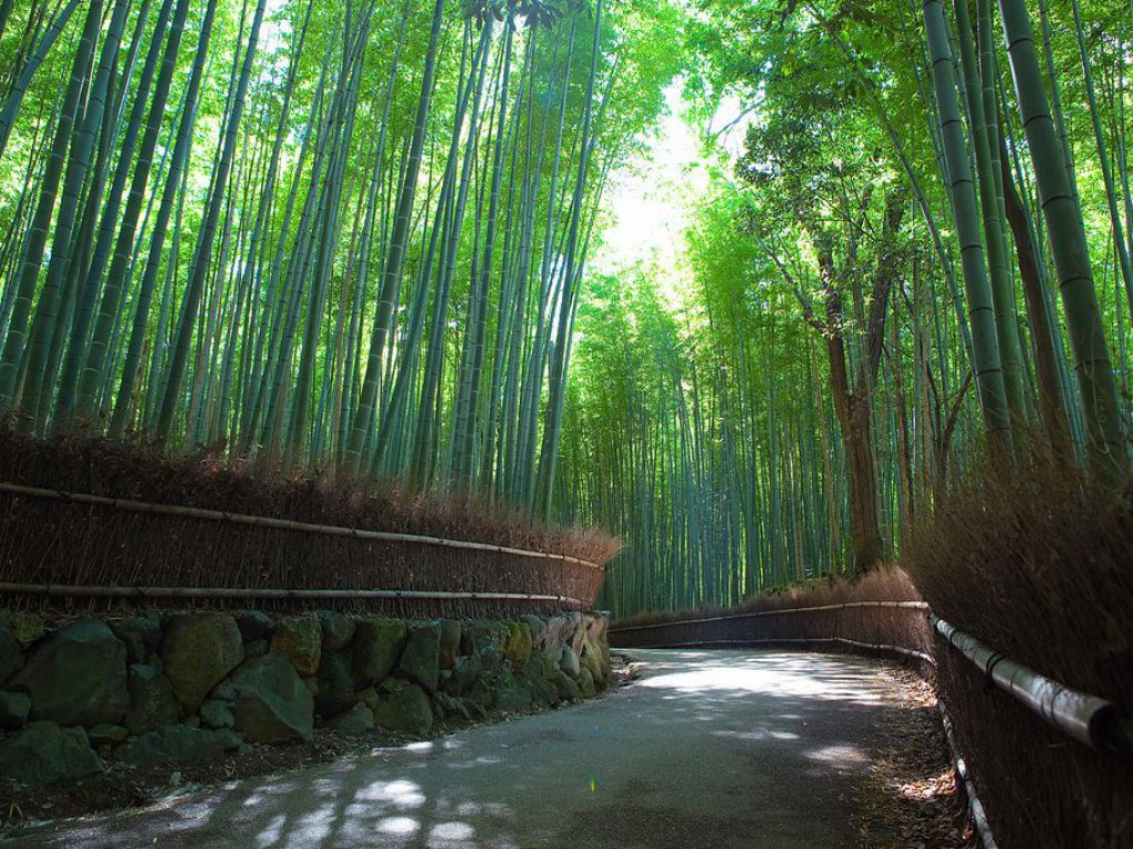 Bamboo Groves for Japan Travel Packages (JapanTravelPackages.com)